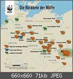 Wölfe in Deutschland - ein Fluch oder Segen der Natur?