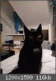 Vier Pfoten für Forumla: Der Katzenthread