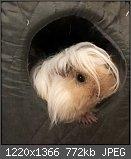 Haustier Thread (Bilder)